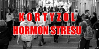 Kortyzol 2